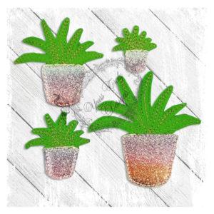 Succulent Aloe