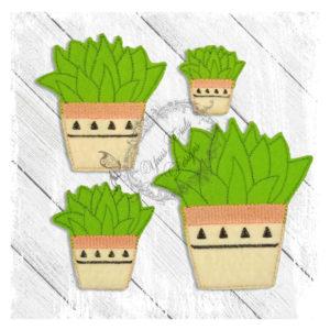 Succulent Leafy